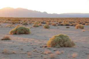 San Bernardino Desert